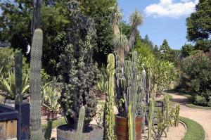 Jardin Mexicain