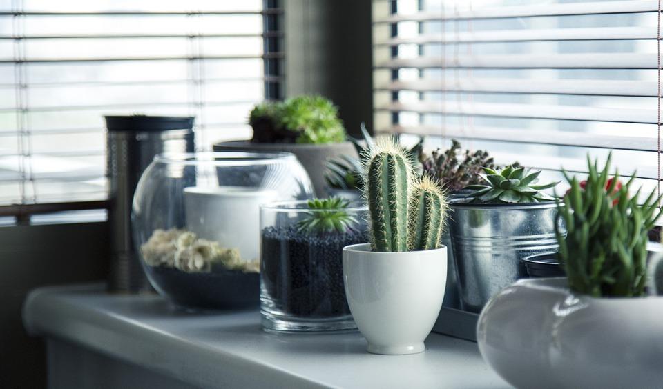 Entretien des plantes d'intérieur