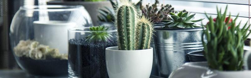 quelles plantes pour quelle v randa le mag de l 39 habitat. Black Bedroom Furniture Sets. Home Design Ideas